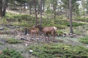 gps elk