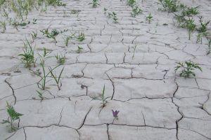 GPS drought2