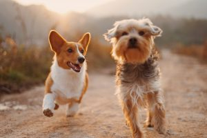 Track your furry friends with GPS tracking tools.